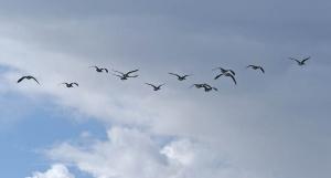 Vogelexcursie Dijkwater en Plan Tureluur @ ertrek op de Haagse Markt (Princenhage), Breda